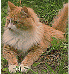 good cat breeds for people with allergies