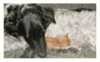 dog nurses stray kitten