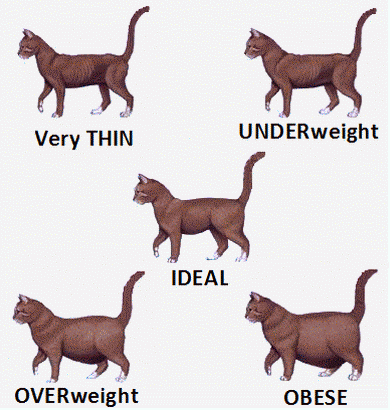 Cat Body Shape Guide Ideal Size And Weight For Cats And