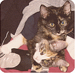 why and when to spay your cat or kitten