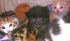 selecting the perfect kitten