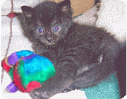 kittencare.com emergency resources for cats and kittens