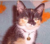 how distemper and Panleukopneia affects kittens...proper kitten care tips