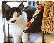 How to Litter Train Kittens effectively...help your kitten adjust