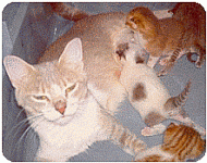 Pre and Post Natal Care Mother Cats...have a safe kitten delivery!