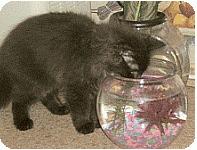 misbehaving cats