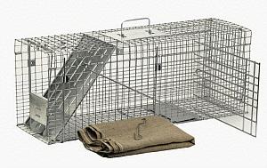 humane cat traps