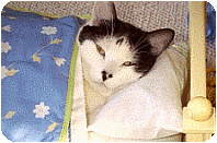 depression and lethargy in kittens