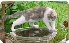 cat hunting instincts
