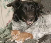 dog friends with kitten