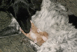 dogs and kittens together
