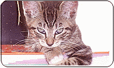proper kitten care, understand Mites and Skin Problems in Cats and Kittens