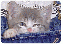 Treating a kitten with diarrhea and loose stools