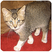 help your kitten use his  litter box and not track litter