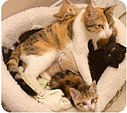 Mother Cat Behavior With Kittens