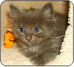 new kitten crash course...prepare for your new kitten