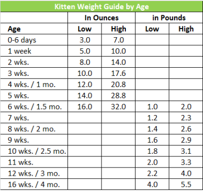 Cat Body Shape Guide Ideal Size Weight And Body Shape For Cats And Kittens