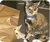odd behaving cats